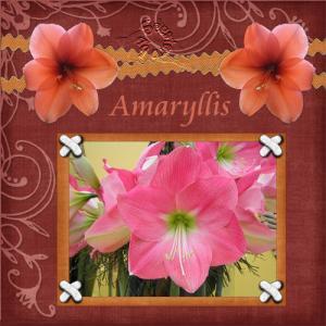 amaryllisweb.jpg