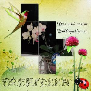 orchideen-lieblingweb.jpg